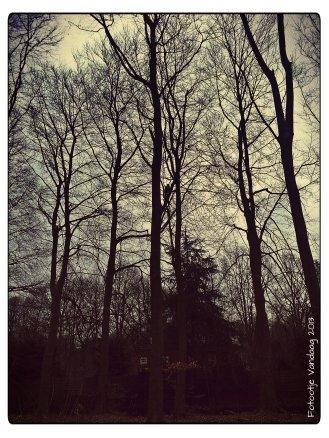 Haagse bos 2