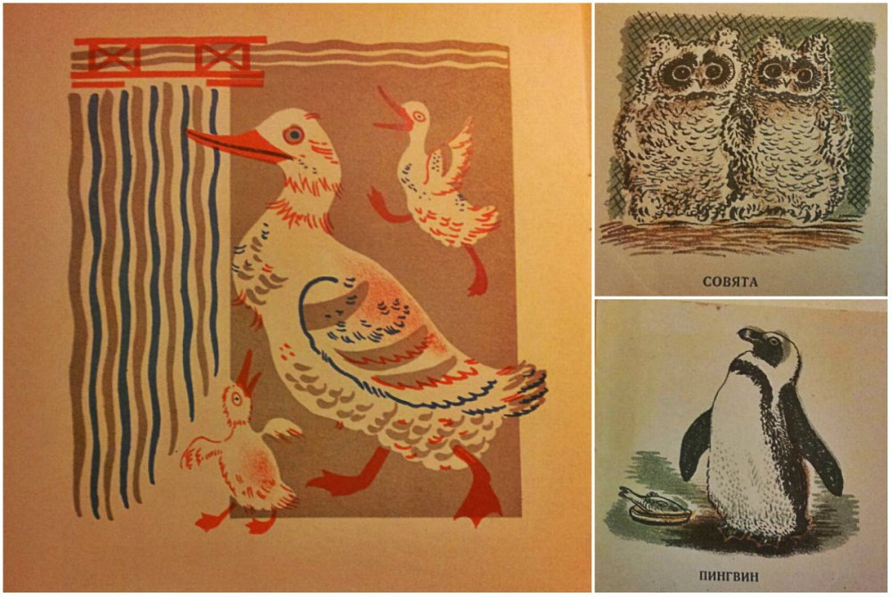 collage dieren meermanno