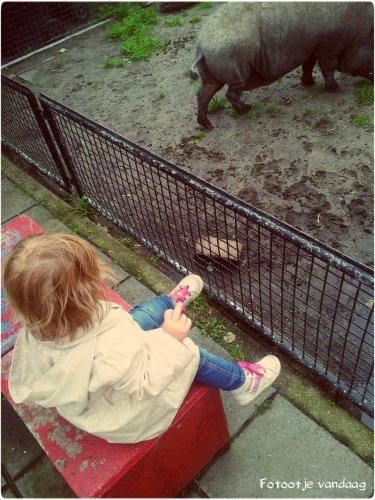 Peutertje en Pumba