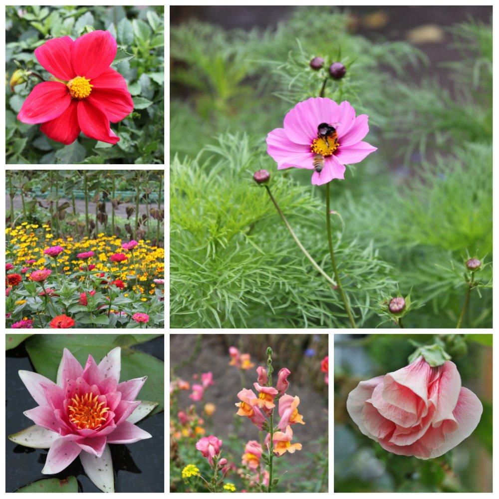 collage roze tuin