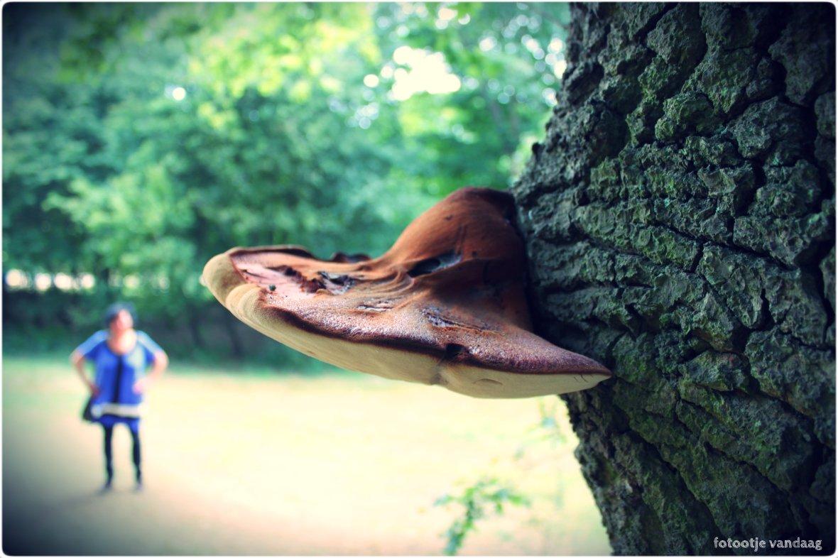 paddestoel en boom