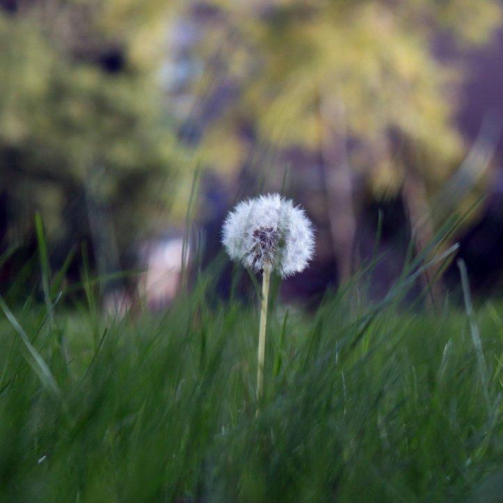 blompje