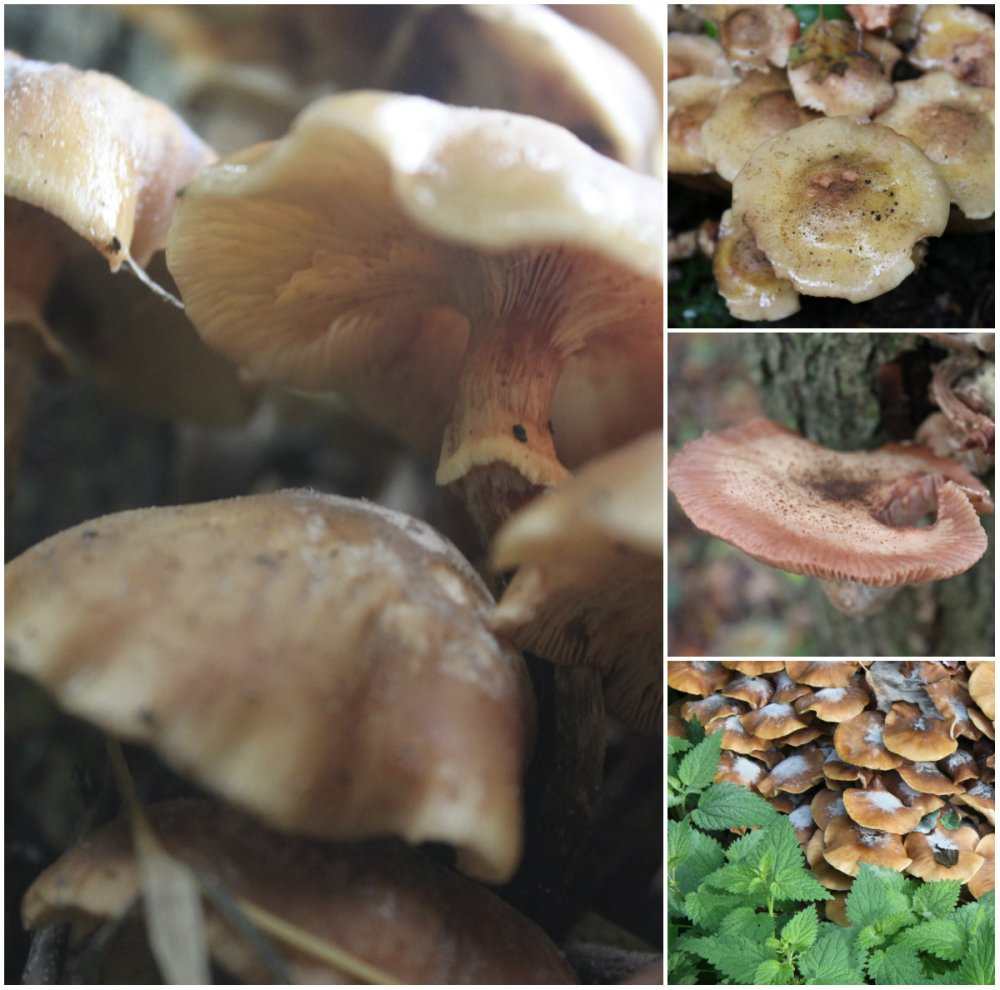 collage paddestoelen