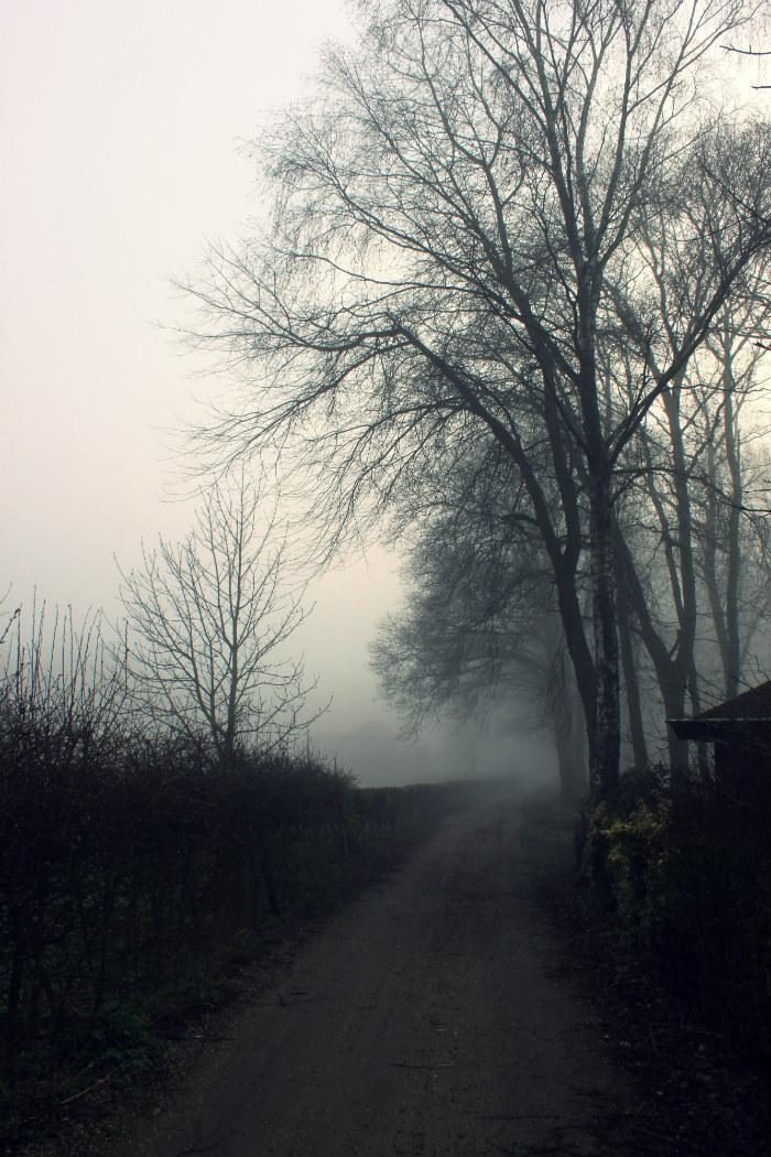 mist tussen de bomen