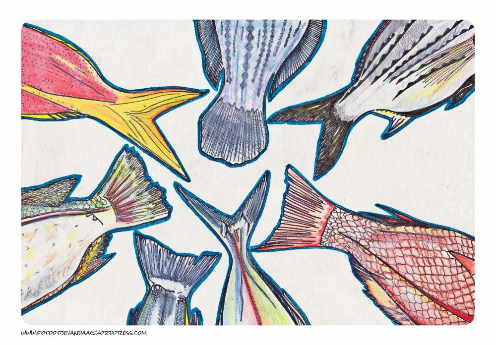 vissen klein