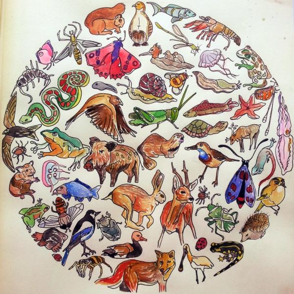 dierenbol kleur klein